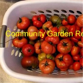 Community Garden Revolution: Products that reduce Food Waste