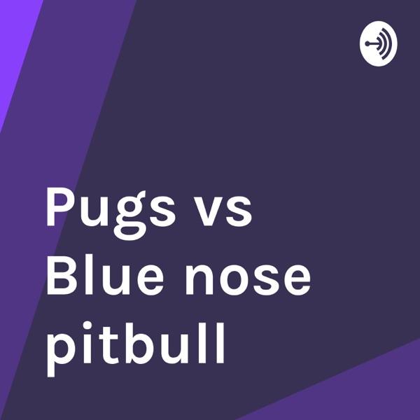 Pugs vs Blue nose pitbull