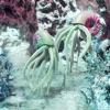 Squid - Single
