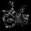 Spotlights - Love & Decay