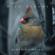 EUROPESE OMROEP   Birds Chirping - Bird Sounds