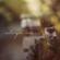 Moldanazar - Aitarym Kop - EP