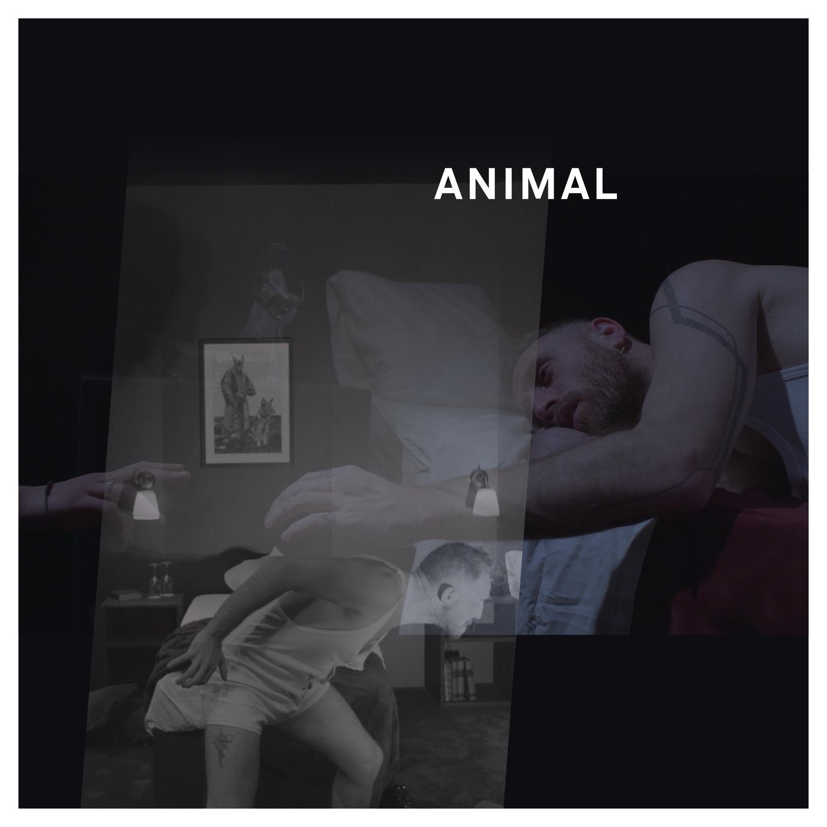 Arsenal - Animal