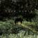Dark Horse - Ari DG