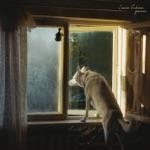 Laura Gibson - Tenderness