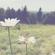 Kina Grannis - You Are My Sunshine mp3