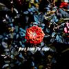 Madalen Duke - Born Alone, Die Alone artwork
