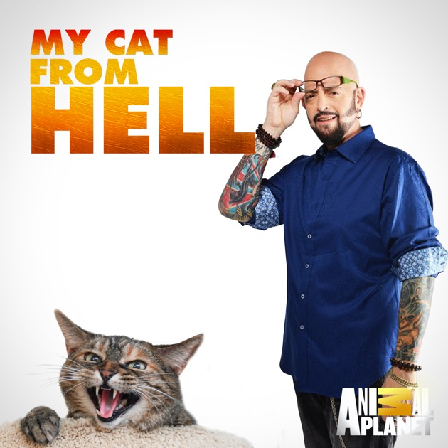 Best Episodes Of My Cat From Hell