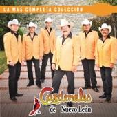 Cardenales De Nuevo León - Belleza De Cantina