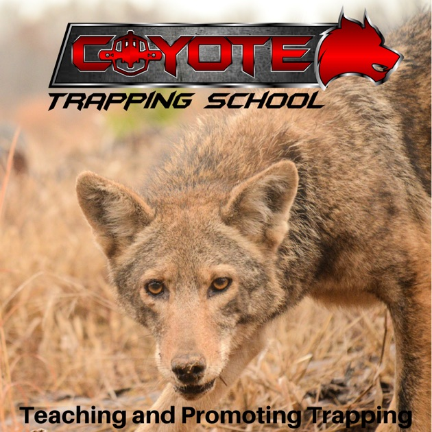 Coyote Trapping School Podcast By Kris Pope On Apple Podcasts