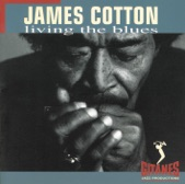 James Cotton - Cotton in the Kitchen