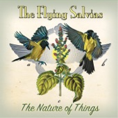 The Flying Salvias - Sweet Little You