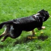 Conor Lynch - Big Lawn