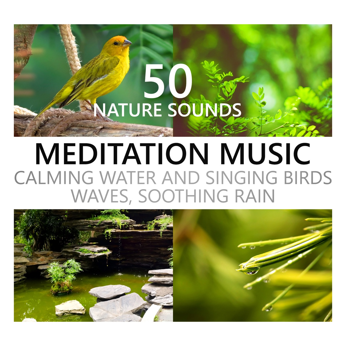 Nature Sounds Meditation Music: Calming Water and Singing