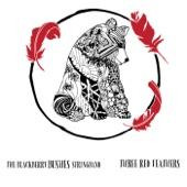 The Blackberry Bushes Stringband - Sam's Song