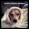 Good Looking Animals