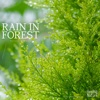 Rain In Forest Relaxing Music - Nature Sound Band