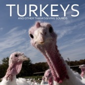 Pro Sound Effects Library - Surrounded By Turkeys