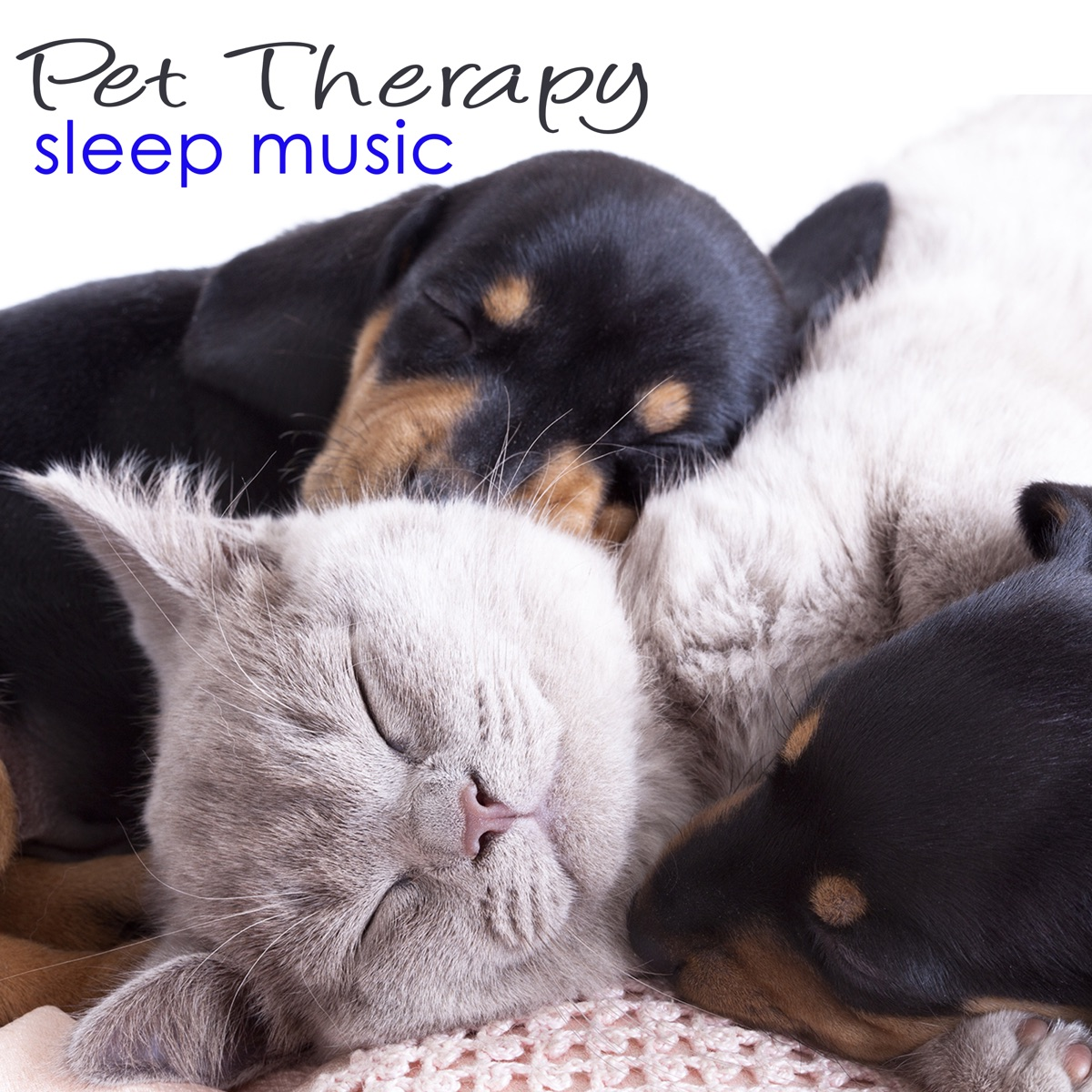 Pet Therapy Sleep Music – Sleeping Animals Healing Music for
