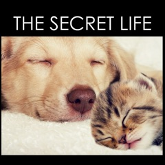 The Secret Life - Pet Therapy Music for Animals at Home Alone
