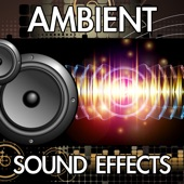 Finnolia Sound Effects - Airplane Boarding (Captain Speaking Aircraft Interior Inside Ambience Background Noise Soundscape Clip) [Sound Effect]