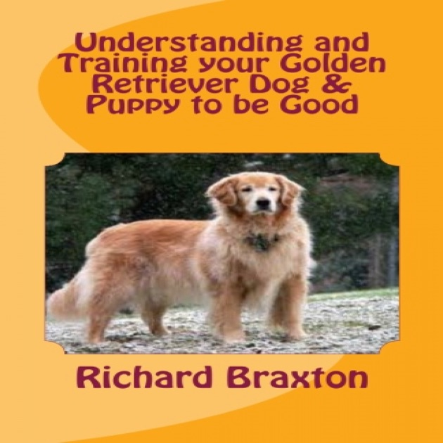 Understanding And Training Your Golden Retriever Dog Puppy To Be