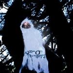Dredd Foole - Signed D.C.