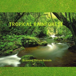 Tropical Rainforest (Relaxing Nature Sounds for Sleep