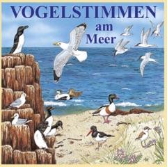 Vogelstimmen am Meer: Mit gesprochenen Erläuterungen