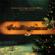 Am Weihnachtsbaum - Coral Dos Canarinhos De Petropolis