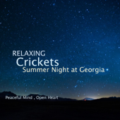 Relaxing Crickets Summer Night at Georgia