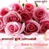 Roses in December Single