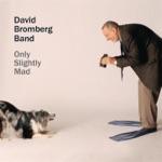 The David Bromberg Band - I'll Take You Back
