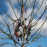 Poison Tree - Single