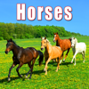 Sound Ideas - Large Group of Horses Galloping By artwork