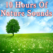 10 Hours of Nature Sounds