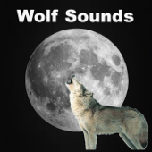 Wolf Sounds in the Rain