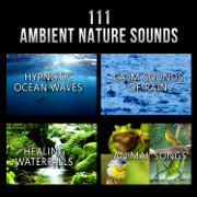 111 Ambient Nature Sounds: Best Relaxing Music, Hypnotic Ocean Waves, Calm Sounds of Rain, White Noise, Healing Waterfalls and Animal Songs to Reduce Stress - Various Artists - Various Artists