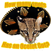How Many Spots Has an Ocelot Got?