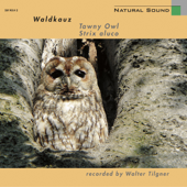 Natural Sound: Waldkauz