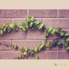 나의 바램 - 나뭇잎