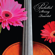 Pachelbel Canon in D - Pachelbel String Quartet