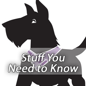 Stuff Students Need to Know - Food, AscAgnes & Free Advice