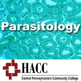 MLT 230: Parasitology & Mycology on Apple Podcasts