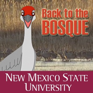 Back to the Bosque