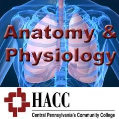BIOL 121: Anatomy & Physiology I