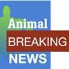 Animal Breaking News artwork