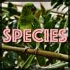 Species artwork