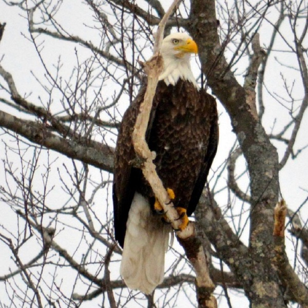 Berkshire Eagle Podcasts