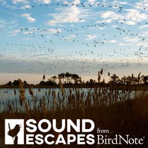 Sound Escapes